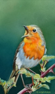 Zingende roodborst © Trudie Hofman