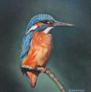 IJsvogel (1) © Trudie Hofman