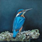 IJsvogel (2) © Trudie Hofman