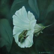Kikker in bloem © Trudie Hofman
