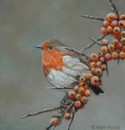 Roodborstje met oranje besjes © Trudie Hofman